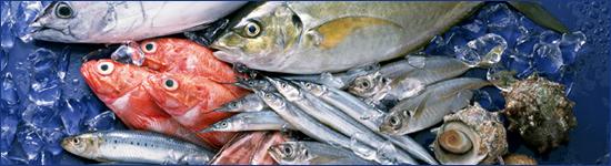 城ヶ島で獲れた新鮮な魚介類をご堪能下さい